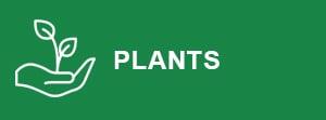 plants-button
