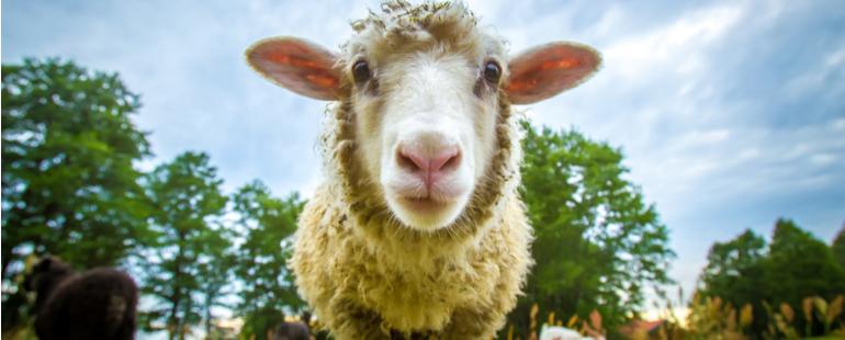 Animal Disease Traceabilit